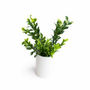 Folhagem verdinhos Verde