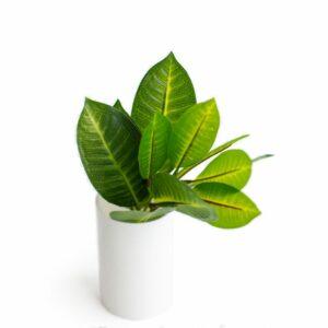 Folhagem rústica – Modelo I Verde